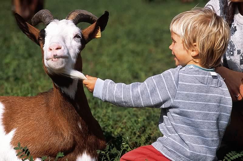 PICODON AOP_ chèvre et enfant_drome ardeche