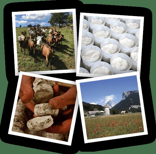 Syndicat du Picodon-roles-missions-Drôme Ardèche-Picodon AOP