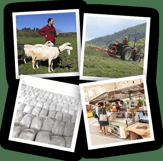 la-fabrication-fromage-picodon-aop-2
