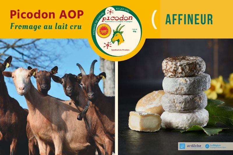 Affineur - Appellation d'Origine Protégée - Picodon - AOP - Drôme - Ardèche - France - Fromage - chèvre