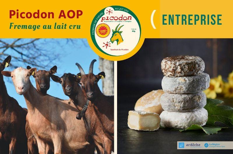 Entreprise - Appellation d'Origine Protégée - Picodon - AOP - Drôme - Ardèche - France - Fromage - chèvre