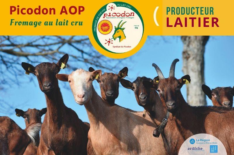 Laitier Appellation d'Origine Protégée - Picodon - AOP - Drôme - Ardèche - France - Lait cru- chèvre