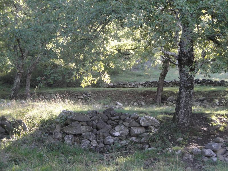 picodon-fermier-pâturage- fromage-de-chèvre- Ardèche-lous-cabris-di-coyron